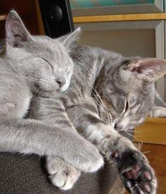 Sleep little cats