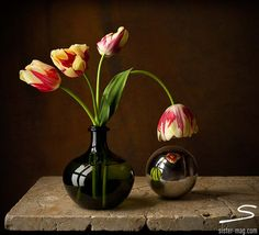 Bas Meeuws - contemporary Dutch flower still life photography ...