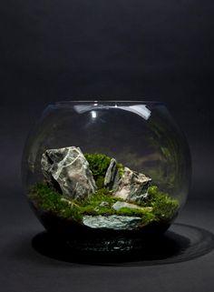 BioAttic – The Art of Indoor Ecosystems