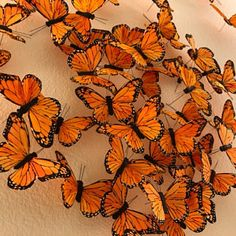 butterfly day  ft. Evan 9228f1e3b12a929e533639e20d1a1879