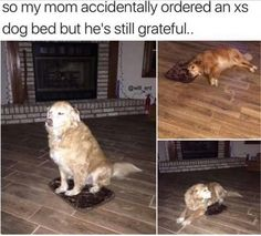 Dogs In Our Life – 20 Funny Pics.