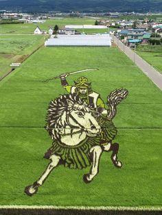 Japanese Rice Paddy Art Makes Crop Circles Look Lame