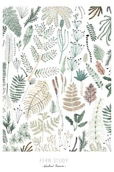 fern study by ohmyhome
