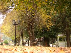 Plaza de Contulmo, Chile.