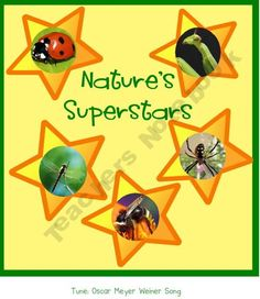 Insects & Spiders: Nature's Superstars