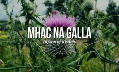 We so need to learn Scottish words ;-) 18 Sweary Scottish Gaelic Words You Need To Use Right Now Scottish Words, Scottish Quotes, Scottish Tattoos, Scottish Gaelic Phrases, Scottish Names, Gaelic Quotes, Gaelic Words, Gaelic Tattoo, Irish Language