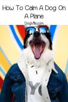 Did you know that some dogs are just as scared to fly as some people? Read on to learn about plane anxiety in dogs and find out how to cope. #dog #dogbehavior #doghealth Dogs On Planes, Tibetan Mastiff Dog, Dog Care Tips, Pet Tips, Pet Care, Dog Pee, Dog Anxiety, Dog Agility, Dog Signs