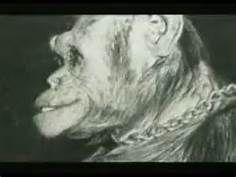 109 best OLIVER-THE HUMANZEE images on Pinterest ...