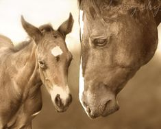 Mother Horse and Baby Foal  Mothers Love Sepia by cherryskyphoto, $28.00