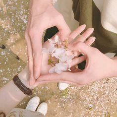 떨어진 벚꽃들 주워서 재활용 수고했어 예쁜이들아 by daxbin