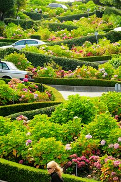 Lombard Street, Russian Hill, San Francisco, California - The crookedest street in the world.