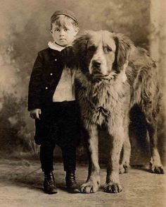 St Bernard and boy