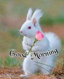 Good Morning Kiss Gif, Good Morning Saturday Images, Good Morning Friends Images, Good Morning Flowers Gif, Good Morning Sister, Good Morning Beautiful Pictures, Good Morning Nature, Good Morning Happy Sunday, Good Morning Image Quotes