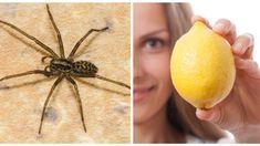 8 enkla sätt att bli av med äckliga spindlar i ditt hem   Allers