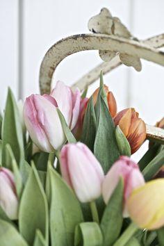 Tulpaner är underbara och lättskötta snittblommor med känslan av vår! Holiday Themes, Spring Time, Flowers, Plants, Inspiration, Biblical Inspiration, Florals, Planters, Flower