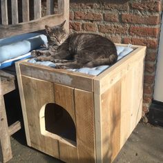 DIY cat house ideas can be made of simple, repurposed materials. Feral Cat House, Feral Cat Shelter, Outdoor Cat Shelter, Cat House Diy, Outdoor Cats, Feral Cats, Cat House Outdoor, Outside Cat House, Cat Perch