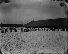 Exterior view of a cotton pickery, with a line of people, some leaning down to pick up cotton. There is a sea of cotton that dominates the entire photograph. Loyola University New Orleans, Louisiana State University, Louisiana History, Louisiana Tech, Oral History, Teaching History, Coding Languages, Types Of Resources, History Museum