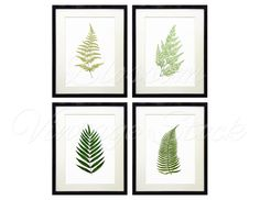 Botanical Printable Set Leaves Fern Botanical INSTANT DOWNLOAD Digital Images, Vintage Illustrations for Print 5x7, 8x10, 11x14 - 1282