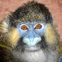 Moustached Guenon at Los Angeles Zoo Los Angeles, CA #Kids #Events