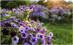 Lilac Purple Flowers Garden Wallpaper | lilac purple flowers garden wallpaper 1080p, lilac purple flowers garden wallpaper desktop, lilac purple flowers garden wallpaper hd, lilac purple flowers garden wallpaper iphone