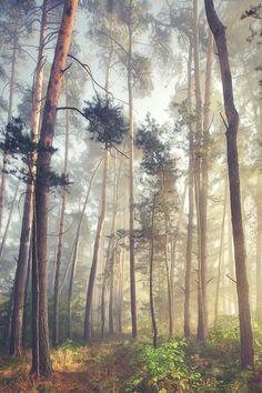 Love light effects in woods!