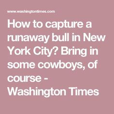 How to capture a runaway bull in New York City? Bring in some cowboys, of course - Washington Times