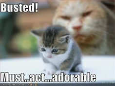 Funny Pictures Adorable Kitten Cute Funny Kittens Pictures Funny Kittens Kittens Cutest Kittens Meowing