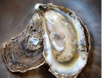 Beautiful Sewansecott oyster via Louisiana Foods