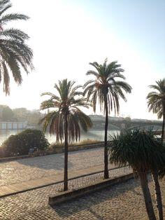 """Sevilla has a special colour"" Travel Around Europe, Traveling, Colour, Plants, Sevilla, Travel, Color, Trips, Flora"