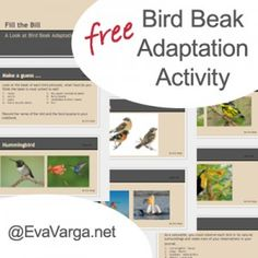 Hands on activities that teach kids about the characteristics and adaptations of birds - including bird anatomy.
