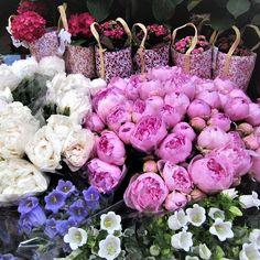 Florist in Saint Germain des Pres  #6tharrondissement #flowersinbloom  #saintgermaindespres #visitparis #france #instatravel #instamoments #enjoy #explore #travel #live #love #adventure #beautiful #picturesque #colourful #vibrant #thisisparis #florist #afternoonstroll #spring #throwback #holiday #instaholiday #sopretty #scenic #thatview #springinparis #melbournelifelovetravel #parisflowers
