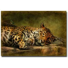 Wake Up; Sleepyhead by Lois Bryan Photographic Print on Wrapped Canvas