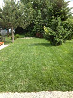 Nature Wallpaper, Stepping Stones, Garden, Outdoor Decor, Stair Risers, Garten, Lawn And Garden, Gardens, Gardening