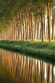 Bomen langs de oever van het kanaal. Damme, België