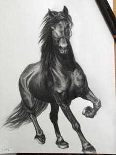 Yet another horse sketch by on DeviantArt Realistic Animal Drawings, Horse Drawings, Art Drawings Sketches, Horse Drawing Tutorial, Tree House Drawing, Horse Tattoo Design, Beautiful Landscape Paintings, Horse Sketch, Horse Artwork