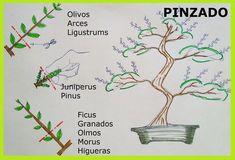 Picture Ficus, Prunus Mume, Bonsai Garden, Bonsai Trees, Terrarium Plants, Greenhouse Gardening, Ikebana, Pictures, Houseplant