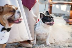 Dogs in a bow tie and tulle skirt sit by the bridesmaids during an outdoor wedding ceremony. Find more wedding party and ceremony ideas at www.mywedding.com.