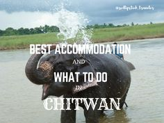 Chitwan National Park is known for countless activities which are in store for tourists. Read my recommendations for perfect accommodation and activities to do in this wild region.