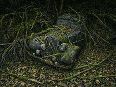 Abandoned Cars Overtaken by Nature