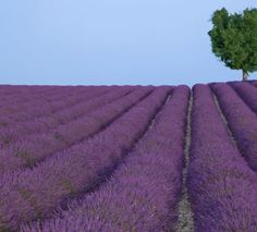 Après la slow food arrive la slow life avec des produits locaux à consommer en honneur de sa région et de ses artisans. Découvrez comment la marque Concept Provence réinvente le savon de Marseille en version ultra moderne.
