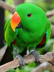 Pittwater Animal Hospital - Parrots