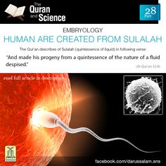 Qur'an as-Sajdah (The Prostration) 32:8:  Then He made his offspring from semen of worthless water (male and female sexual discharge).