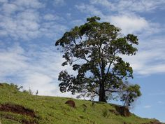 Céu e árvore