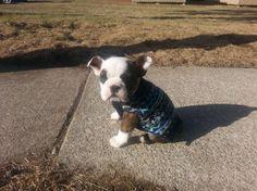 Neighbor got a new puppy today.