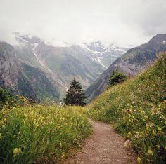 forbiddenforrest:  the way through, part three by manyfires on Flickr.