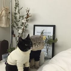 i have never been more happy to see cats in sweaters