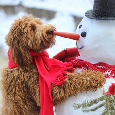 We interrupt our typical wedding inspiration for a bit of festive cheer from @goldendoodlesofinstagram. Who can resist this fabulous shot! #GoldenDoodle #festive #cheer #winter #snowman #winteriscoming #snow #puppy #petlover #petlove #love #pets #dogstagr