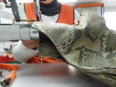 Making of the #python talega - #leather #crafstmanship #handmade