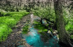 Water + Nature