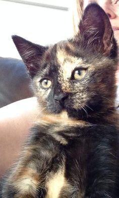 Baba Vanga - My Kitten